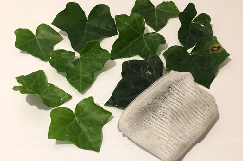 Efeu: natürliches Wasch- & Spülmittel selber machen!